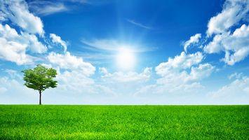 Бесплатные фото небо,облака,солнце,дерево,крона,зелень,поле