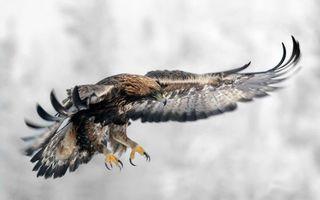 Бесплатные фото орел,крылья,размах,взмах,полет,глаза,клюв