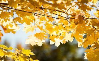 Заставки осень, листья, желтый
