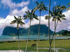 Бесплатные фото пальмы,вода,море,песок,корабль,горы,природа