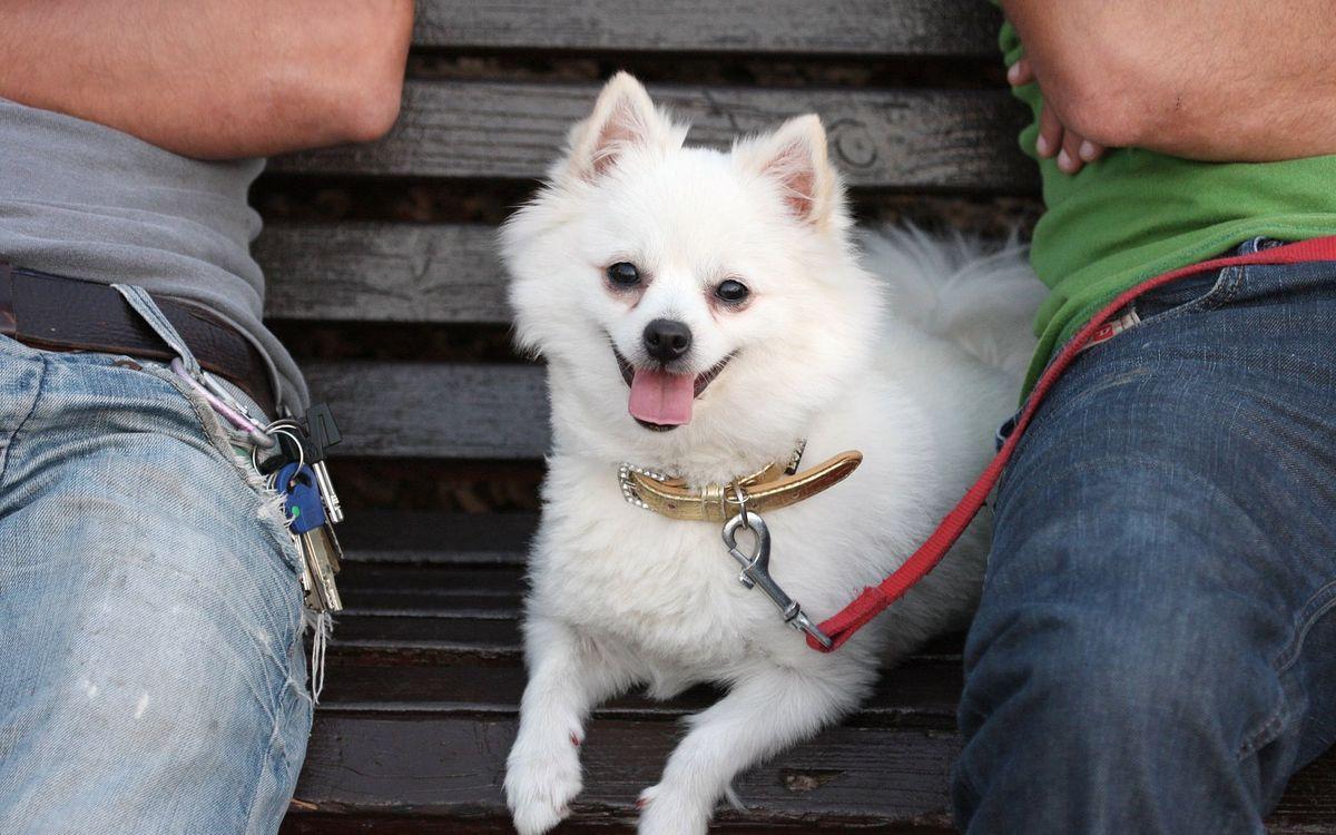 Фото бесплатно пес, щенок, шерсть, лохматый, пушистый, глаза, мордочка, порода, нос, зубы, уши, голова, ошейник, поводок, лапы, собаки
