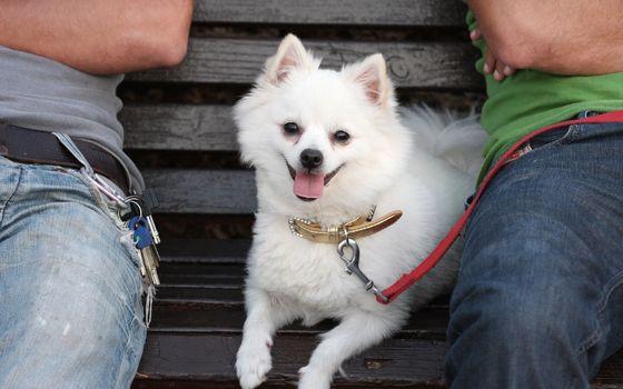 Photo free puppy, furry, paws
