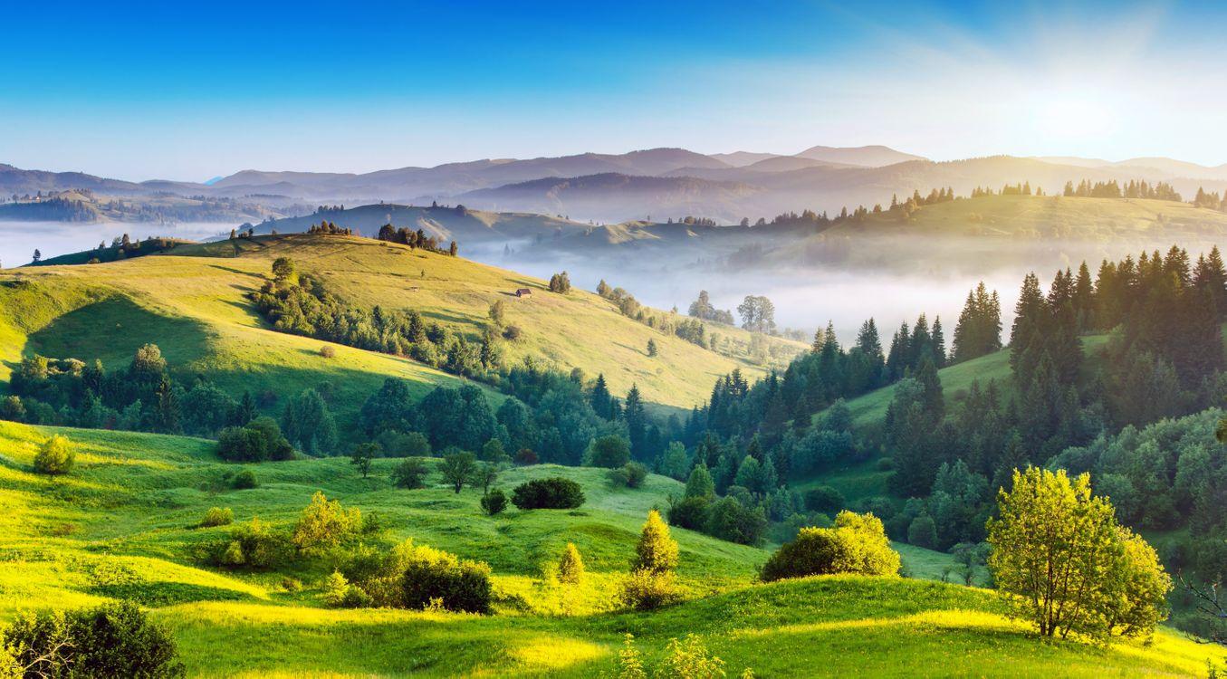 Фото бесплатно природа, поле, лес, пейзажи, пейзажи