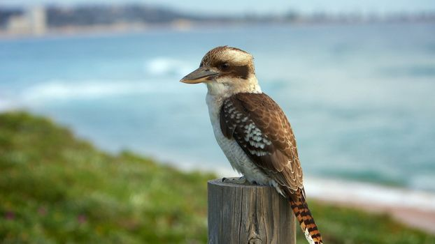 Фото бесплатно птица, перья, окрас