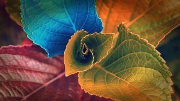 Бесплатные фото разноцветные,листья,красный,оранжевый,синий,листок,природа