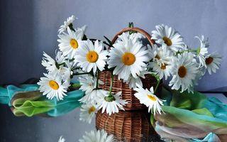 Бесплатные фото ромашки,корзина,букет,лепестки,серединки,желтые,стебли