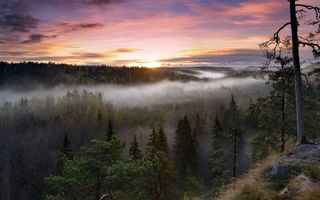 Бесплатные фото таёжный туман,лес,камень,тайга,туман,солнце,природа