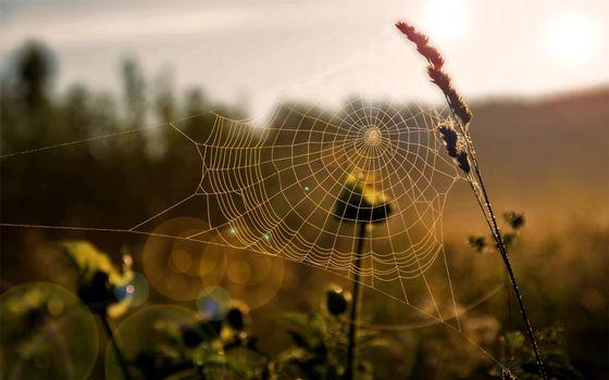 Бесплатные фото трава,паутина,узор,сеть,ловушка,природа,разное