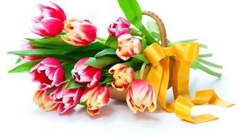 Бесплатные фото тюльпаны,лепестки,стебли,листья,корзинка,подарок,цветы