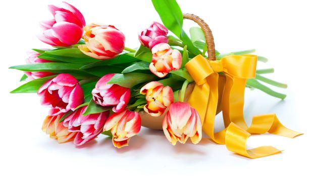 Фото бесплатно тюльпаны, лепестки, стебли