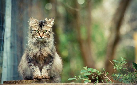 Фото бесплатно кошка, бетон, плита