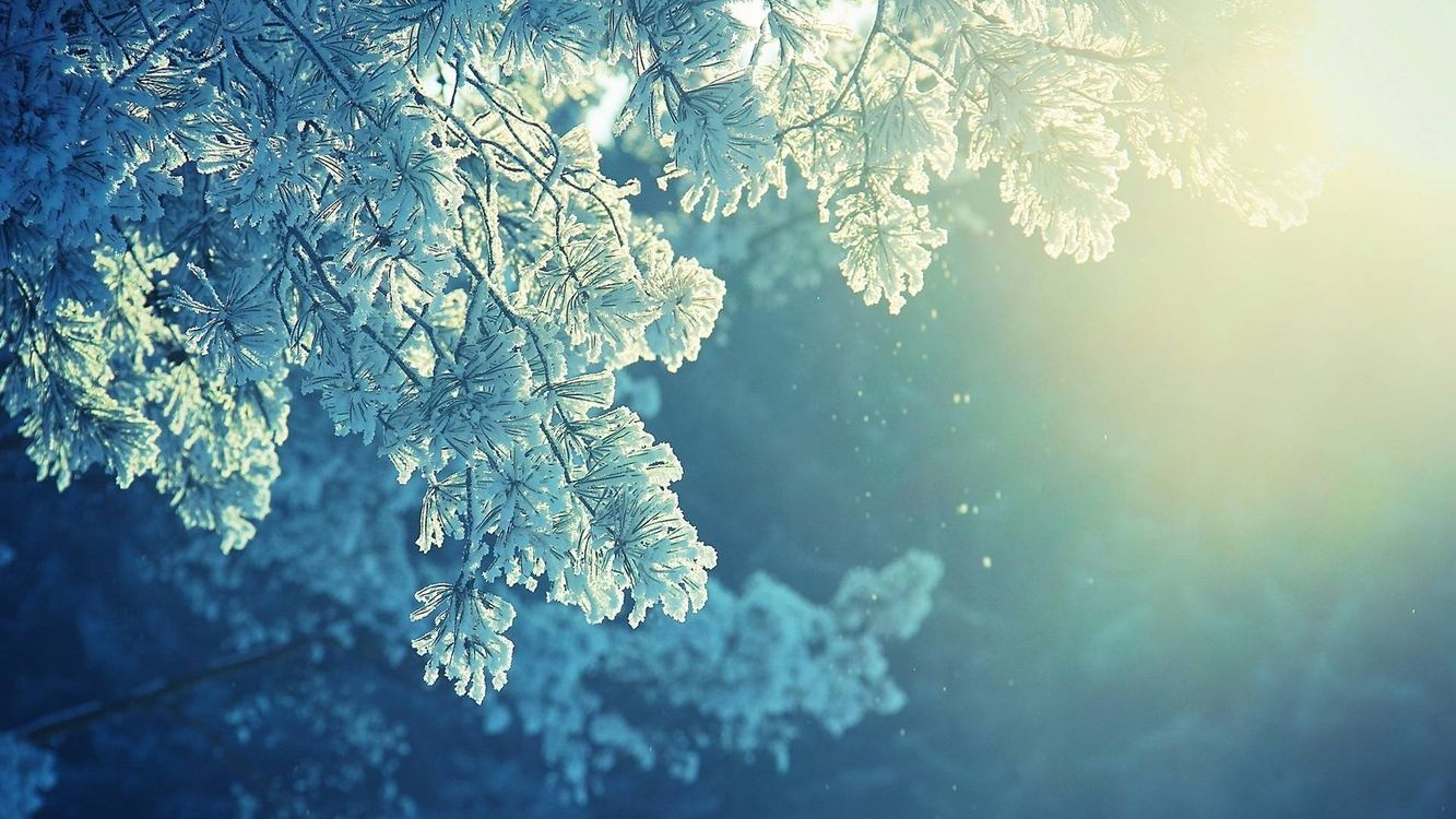 Фото бесплатно ветви, зима, снег - на рабочий стол