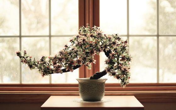карликовое деревце, окно, цветок, relax