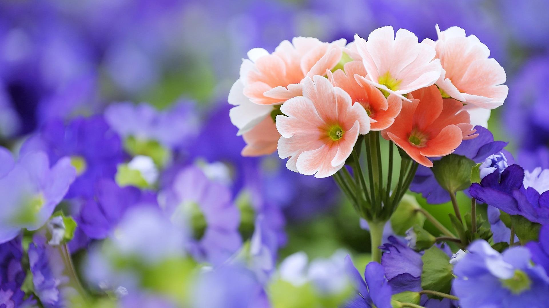 Букет цветы розовые макро сиреневые