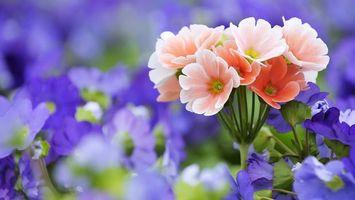 Фото бесплатно букет, цветы, розовые