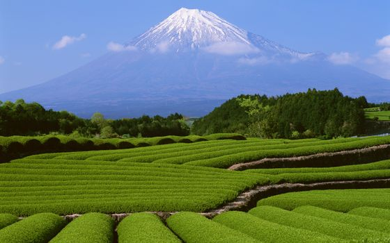Фото бесплатно вулкан, поле, трава