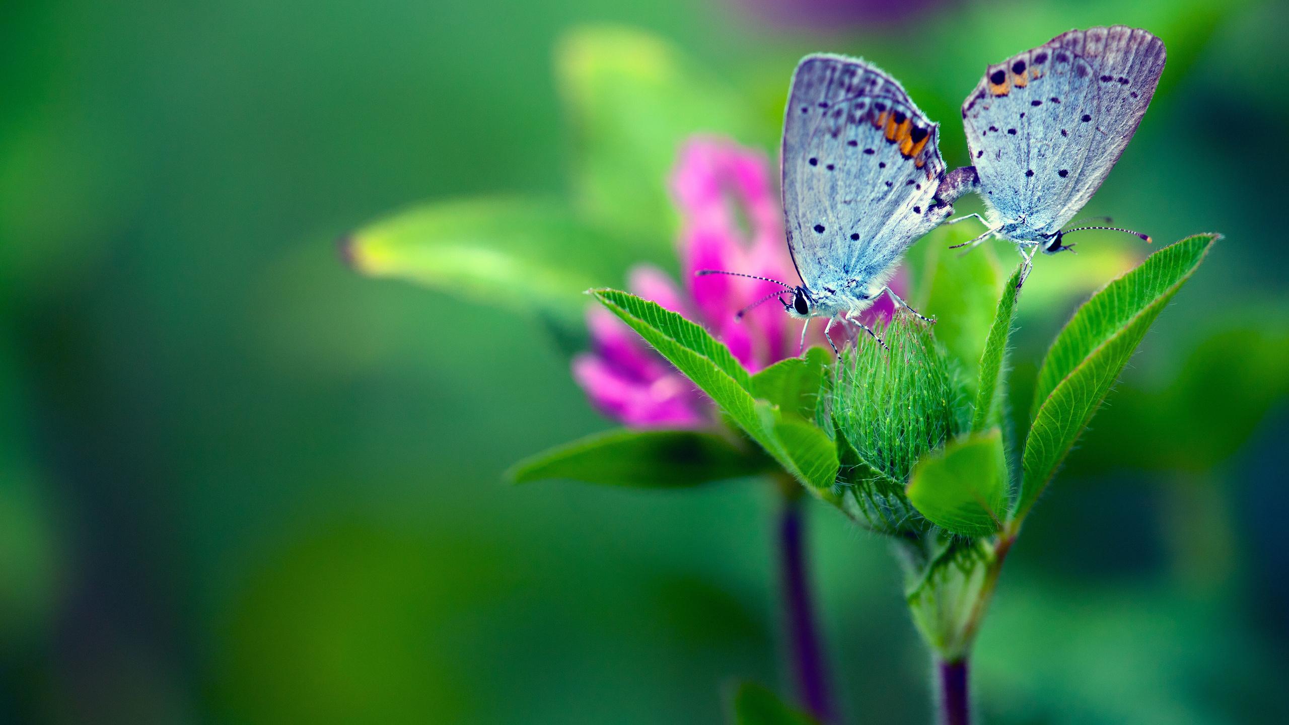 фото цветов и бабочек: