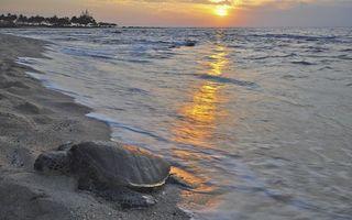 Бесплатные фото берег,моря,песок,волны,черепаха,закат,солнца