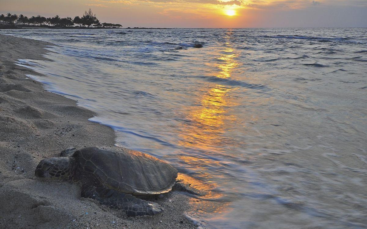 Фото бесплатно берег, моря, песок - на рабочий стол