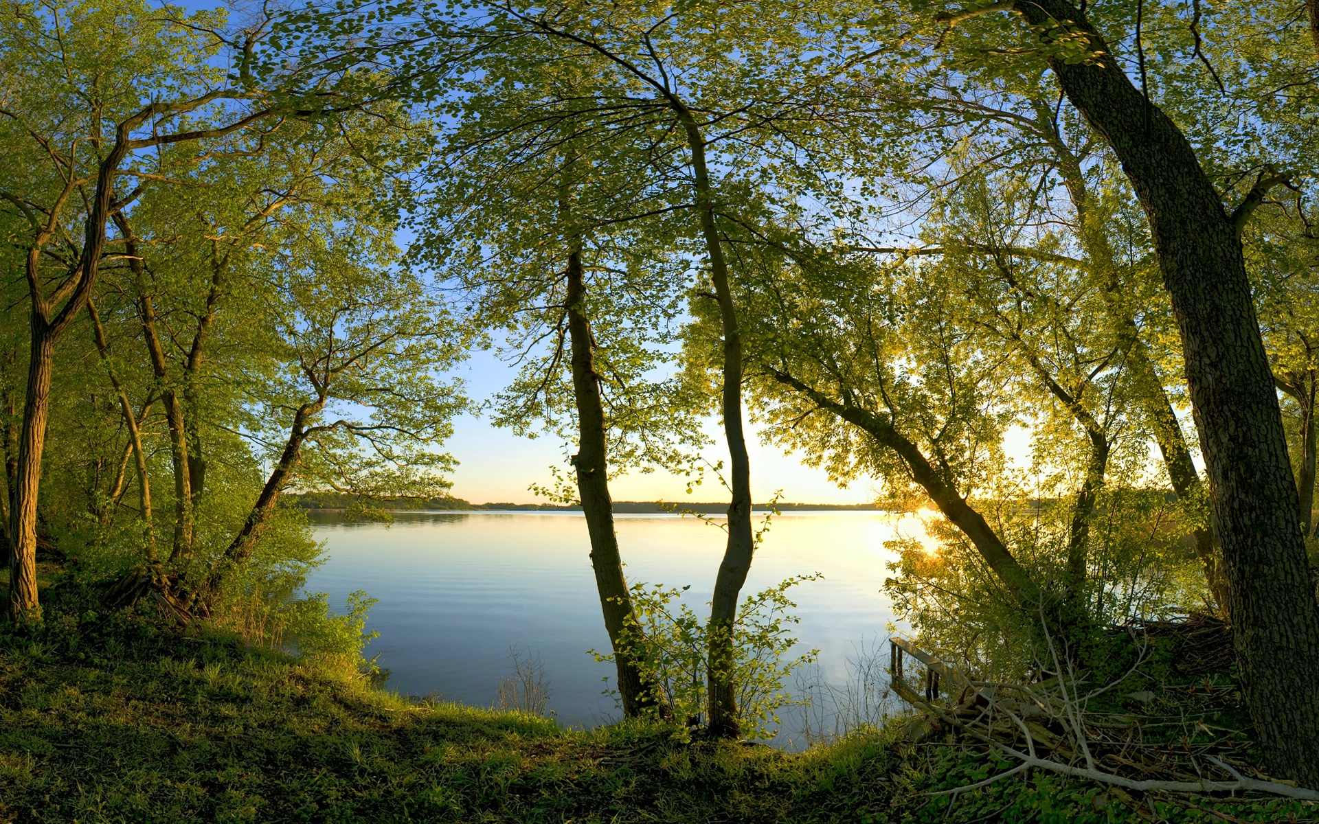 берег, трава, деревья