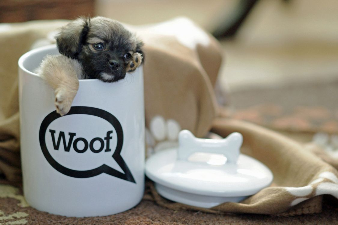 Фото бесплатно чашка, кружка, щенок, пес, лапки, уши, глаза, нос, шерсть, ткань, крышка, собаки, собаки
