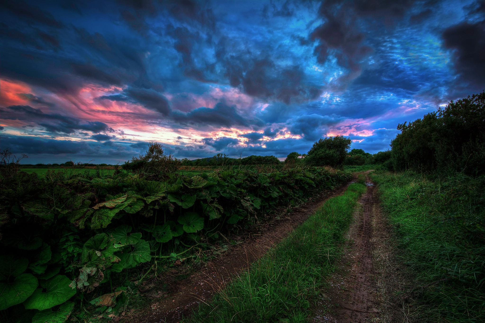 дорога, полевая, трава