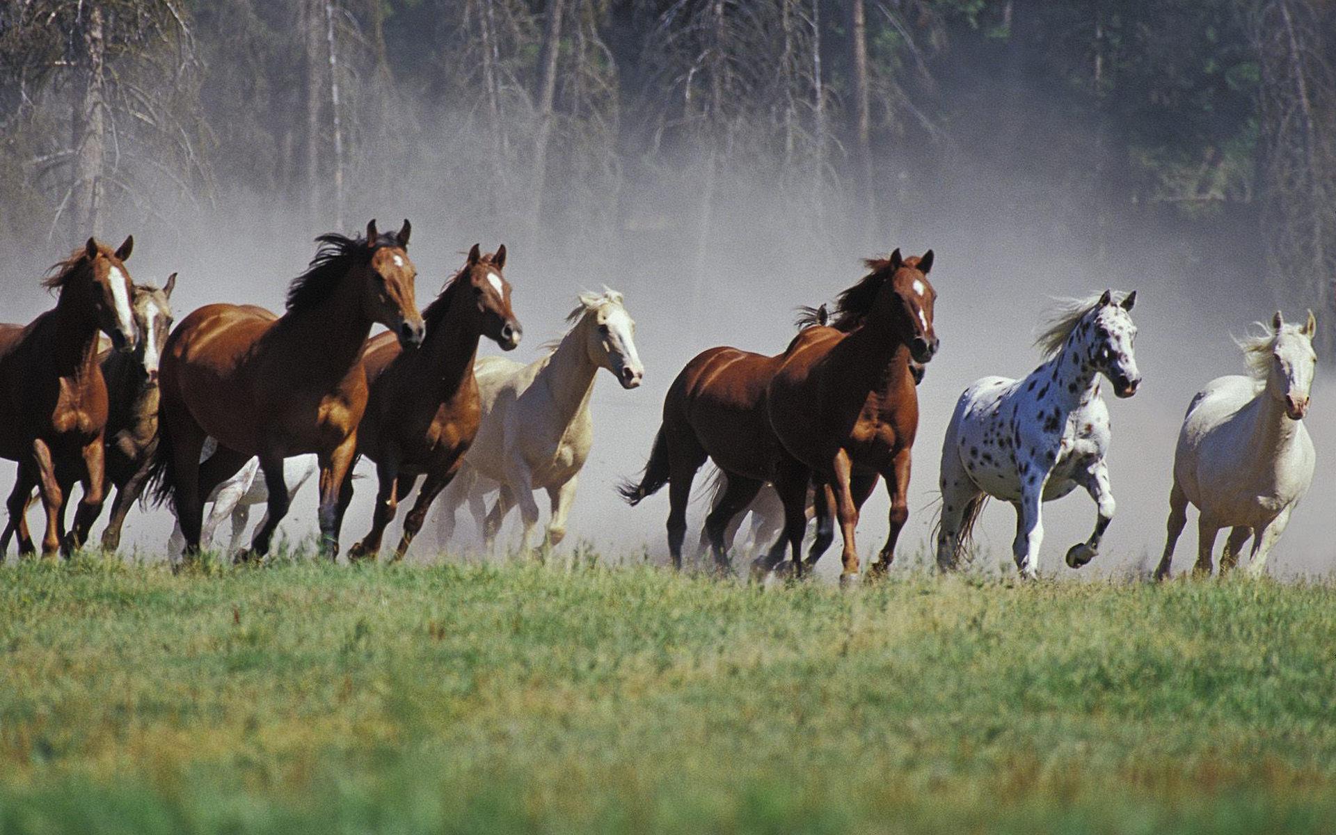 кони, табун, бегут