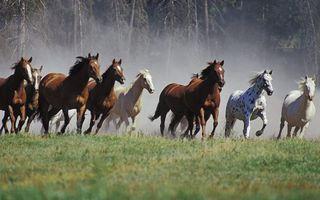 Заставки кони, табун, бегут, трава, пыль, деревья, животные