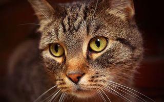 Бесплатные фото кот,большой,домашний,окрас,полосатый,глаза,зеленые