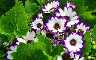 Бесплатные фото лепестки,белые,кончики,фиолетовые,листья,стебли,зеленые
