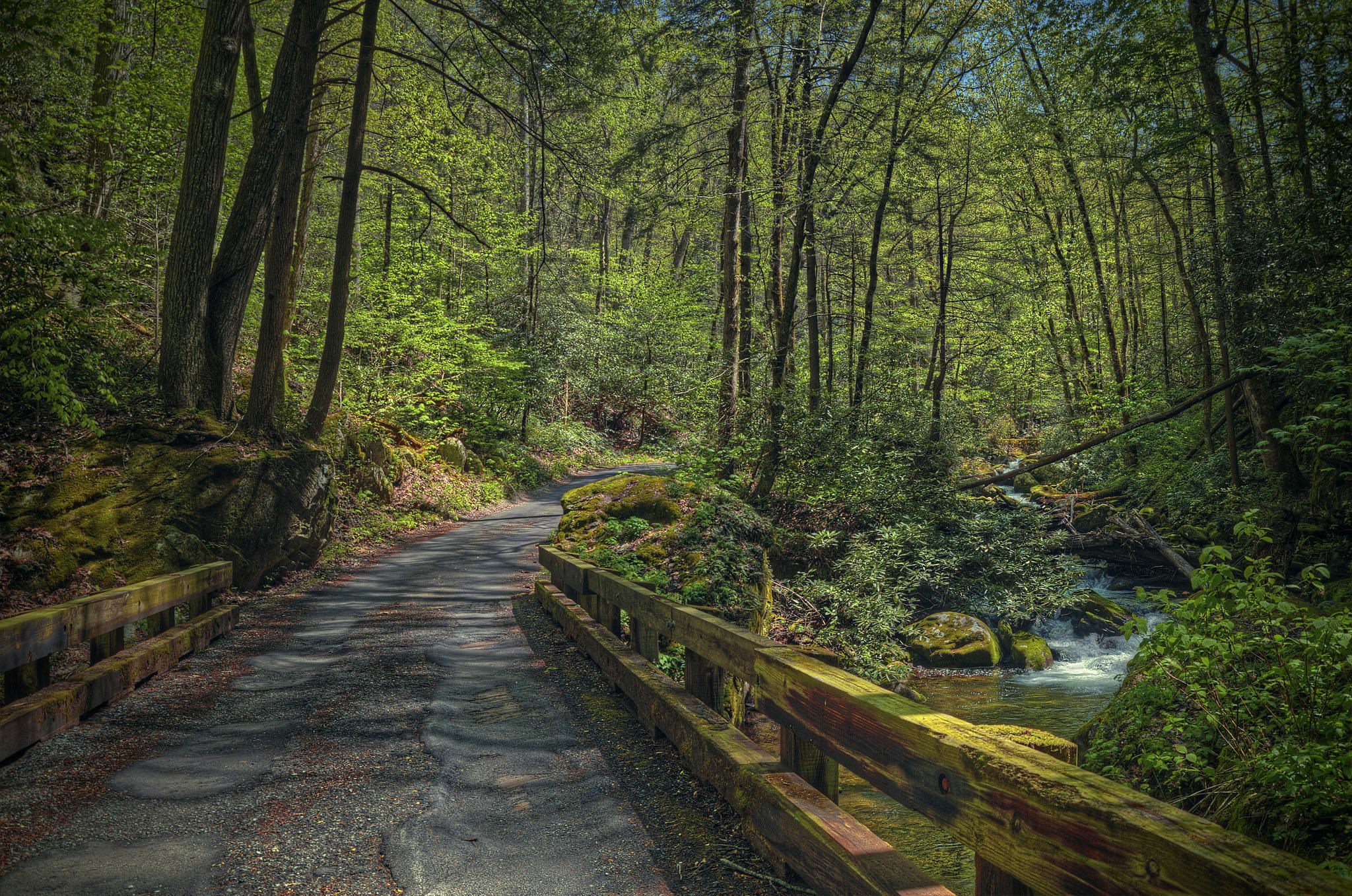 обои лес, деревья, дорога, речка картинки фото