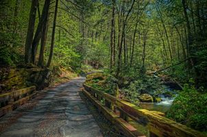 Бесплатные фото лес, деревья, дорога, речка, водопад, мост, Гатлинбург