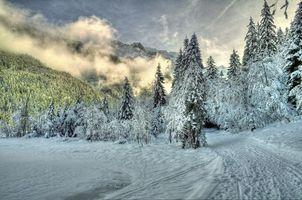 Фото бесплатно белый, небо, лес
