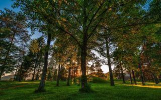 Бесплатные фото лес,трава,деревья,холмы,листья,небо,солнце