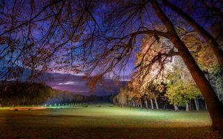 Бесплатные фото ночной,парк,деревья,лес,поле,лужайка,газон