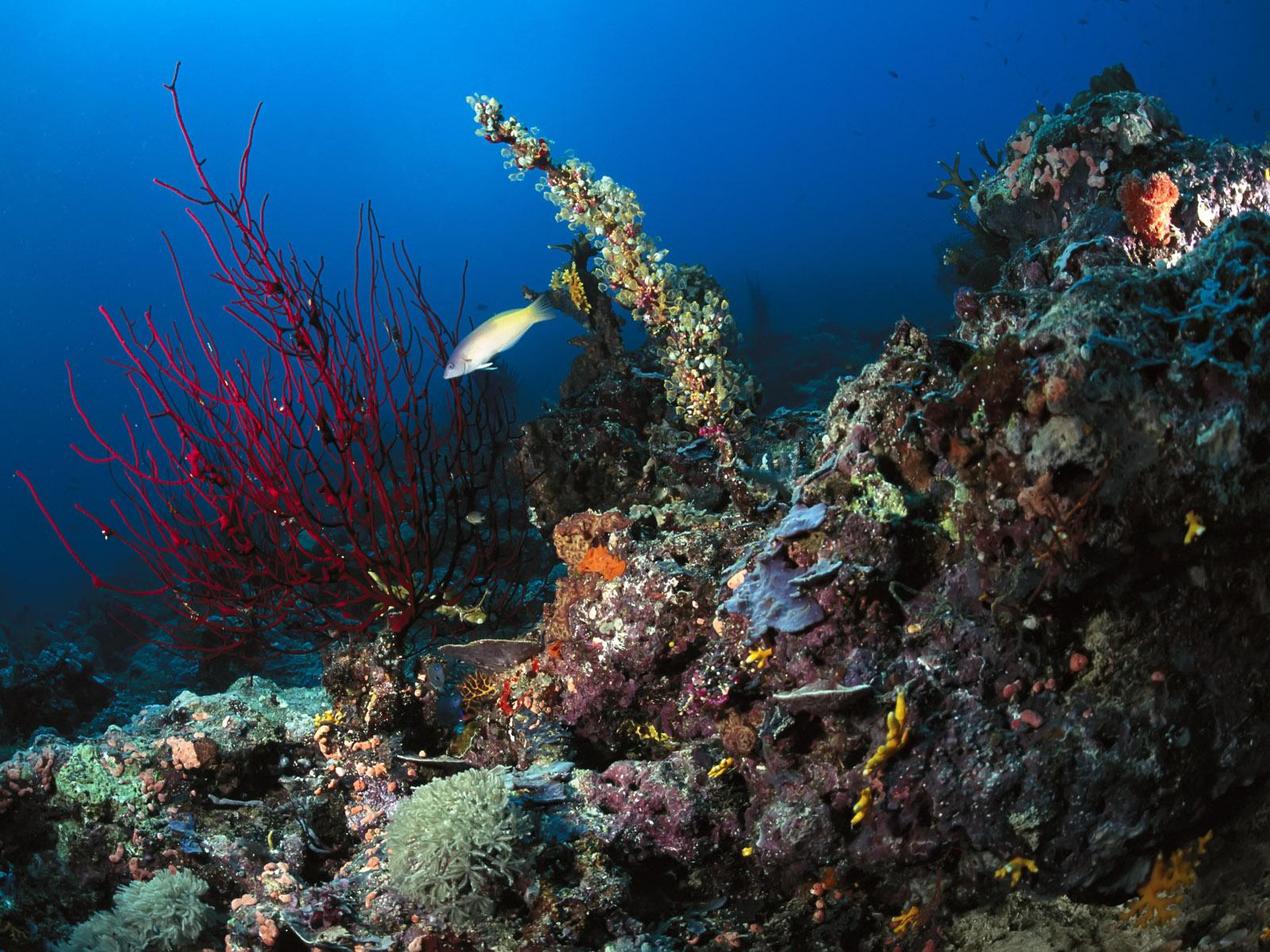 океан, рыба, рифы