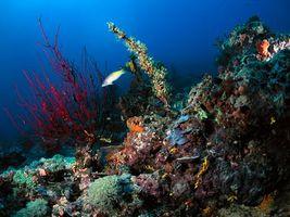 Заставки океан, рыба, рифы