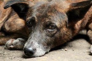 Бесплатные фото пес,щенок,уши,глаза,лапы,песок,друг