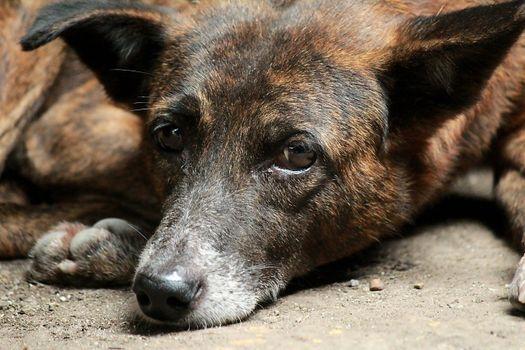 Фото бесплатно щенок, песок, нос