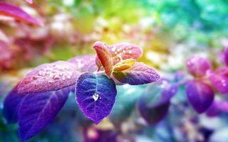 Заставки растение, ветка, листья, капля, роса, вода, жидкость, дождь, яркий, цветок, куст, лес