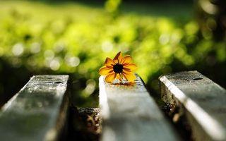 Бесплатные фото цветок,лепестки,листья,стебель,скамейка,лавочка,цветы