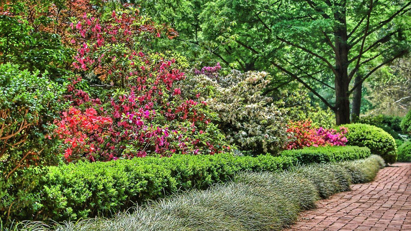 Фото бесплатно природа, трава, путь - на рабочий стол