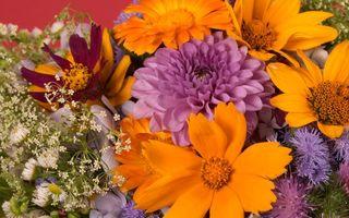 Бесплатные фото цветы, разные, букет, лепестки, красота