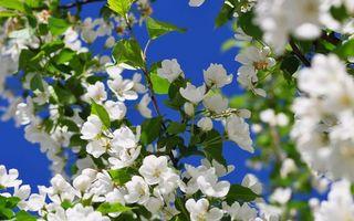 Фото бесплатно ветка, цветки, листья
