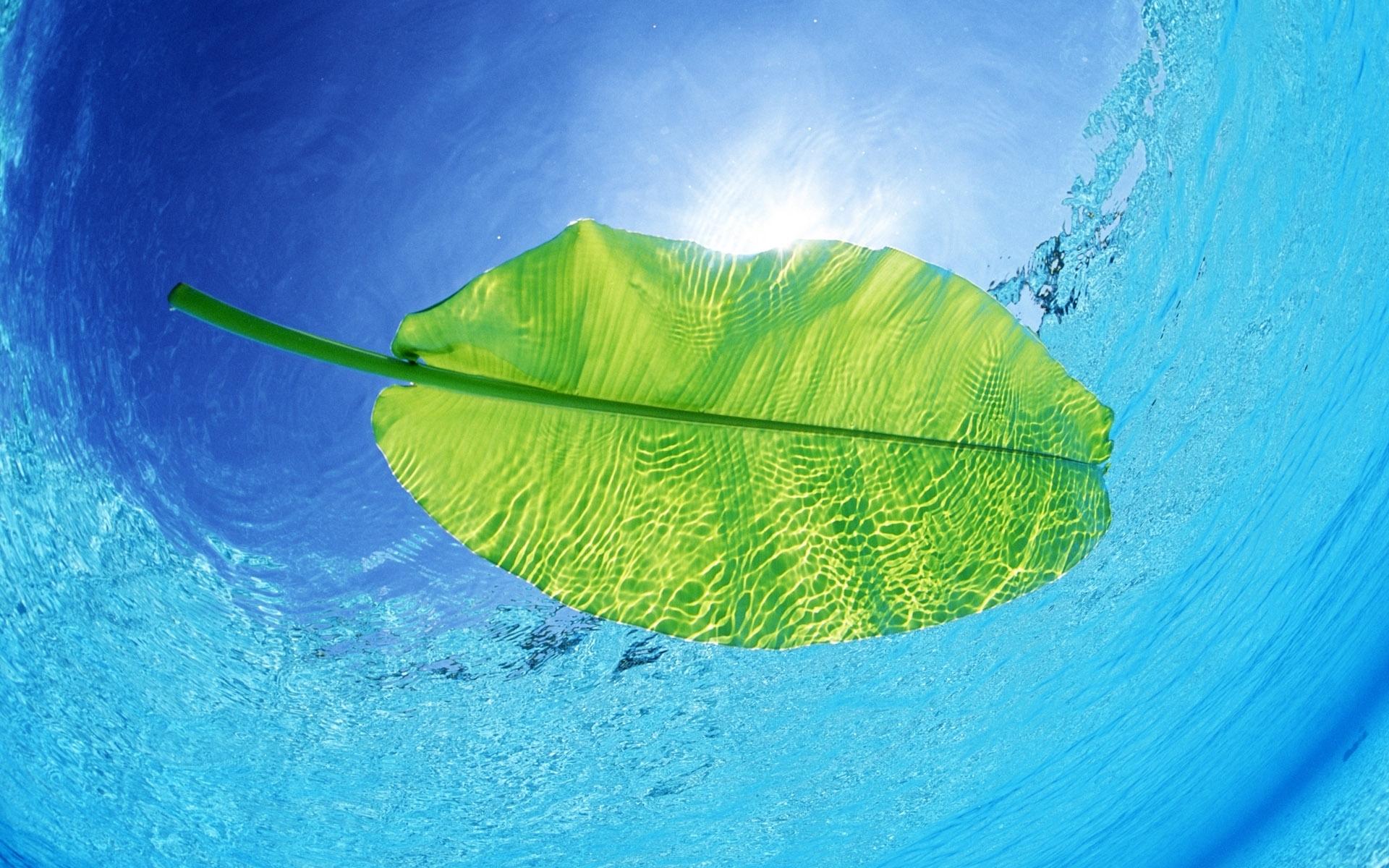 вода, голубая, лист