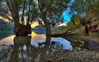 Бесплатные фото вода,деревья,водоросли,камни,закат,пейзажи,природа