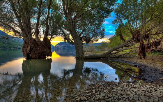 Photo free water, trees, algae