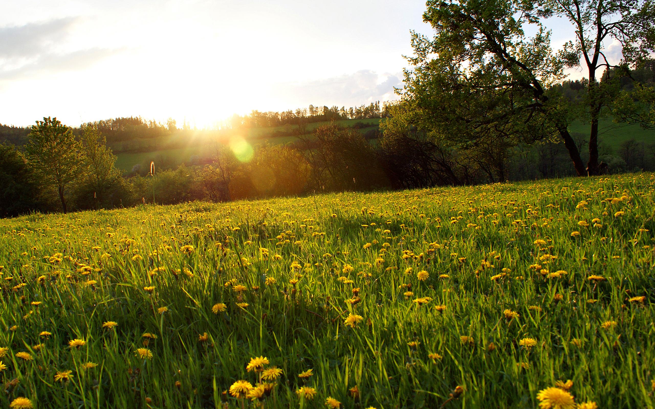 картинки весна поле одуванчиков настройкам