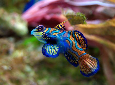 Фото бесплатно животные, риби, море
