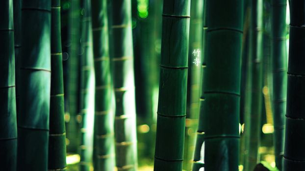 Photo free bamboo, thicket, green
